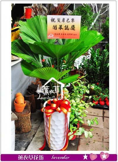 普葵盆景B101011
