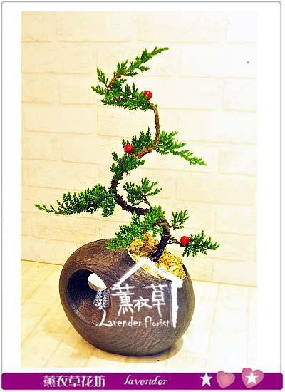 松柏盆栽~造型款 106040702