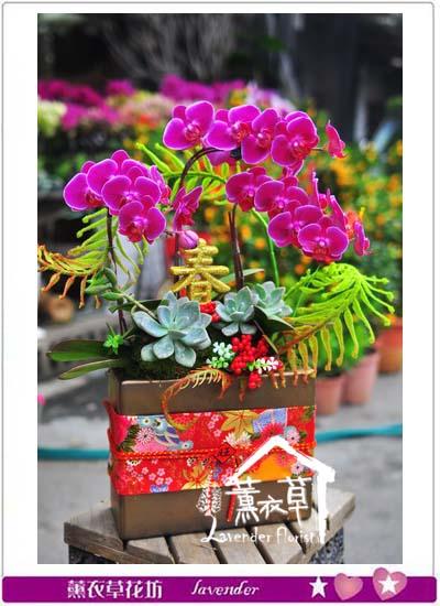 蝴蝶蘭設計106012002