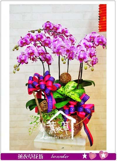 蝴蝶蘭 設計106011102