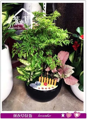 富貴樹組合盆栽106102522