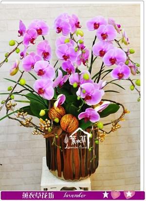 高雅蝴蝶蘭b052007