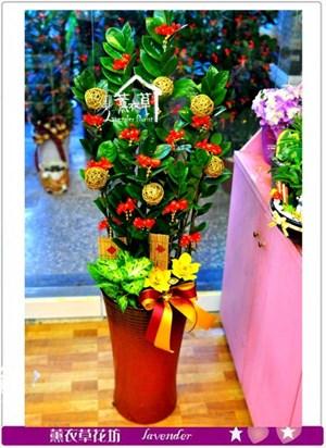 金錢樹盆栽c090733