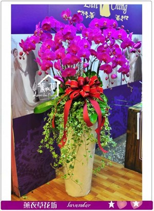 豪華大型蝴蝶蘭設計a080503