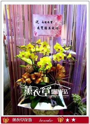 高雅蝴蝶蘭6株y30958