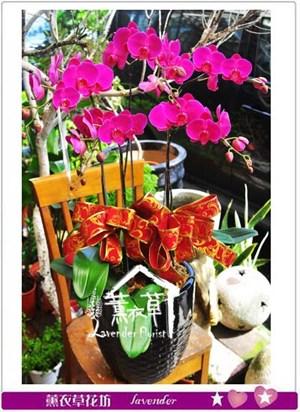 蝴蝶蘭設計 106101611