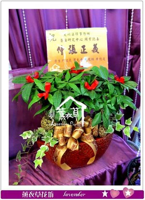 發財樹盆栽aa5400