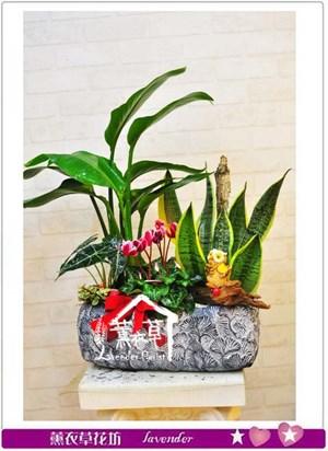 組合盆栽設計106010505