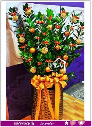 金錢樹盆栽a092103