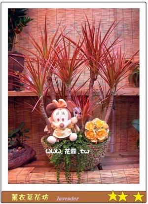 南天竹盆景D201