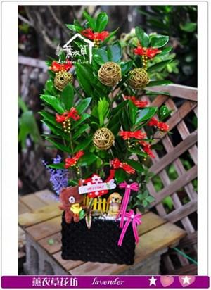 金錢樹盆栽c091312