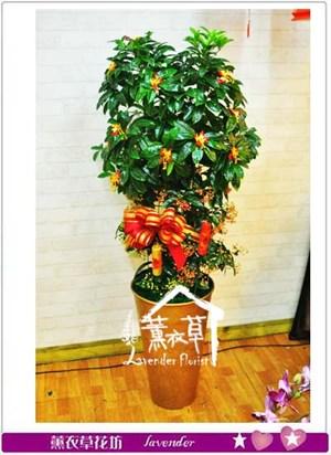 黃金萬兩盆栽~新年款106011005
