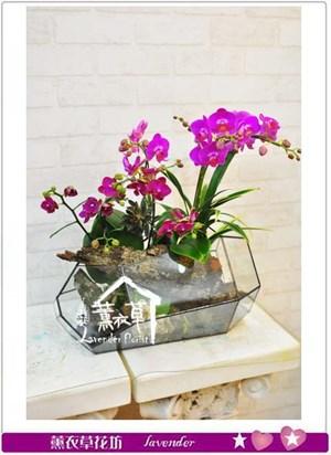高雅蝴蝶蘭~玻璃花器款B111201