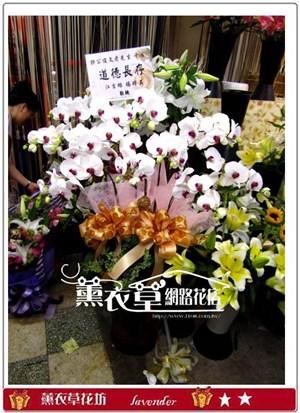 高雅蝴蝶蘭10朱y30829