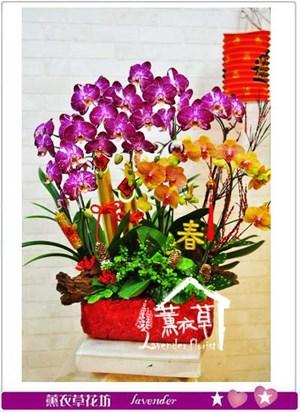 蝴蝶蘭設計106011103