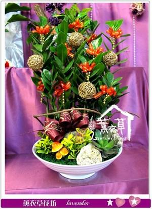 金錢樹盆栽y345016
