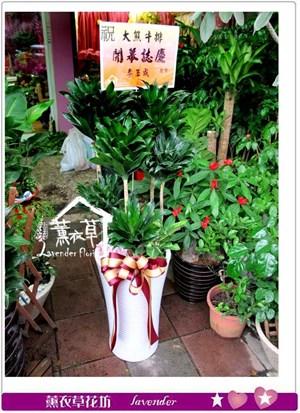 阿波羅盆栽y435066