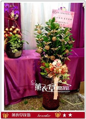 金錢樹盆栽y31878