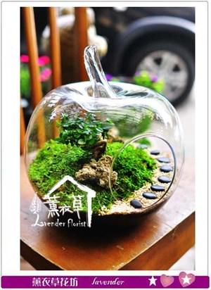 玻璃生態缸~蘋果款106020705