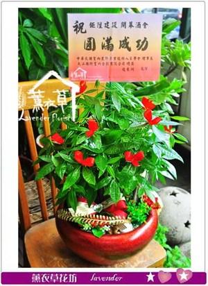 發財樹盆栽 106070711