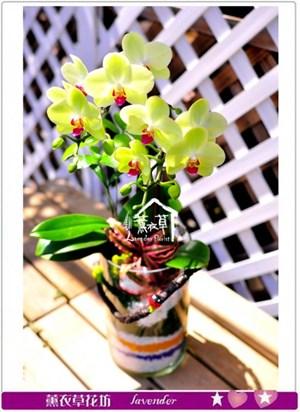 蝴蝶蘭設計c093020