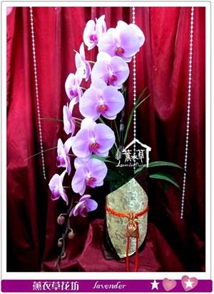 長梗冠軍蝴蝶蘭c012315