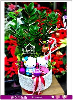 金錢樹盆栽c121606
