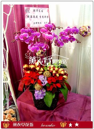 蝴蝶蘭禮盆7株y3902
