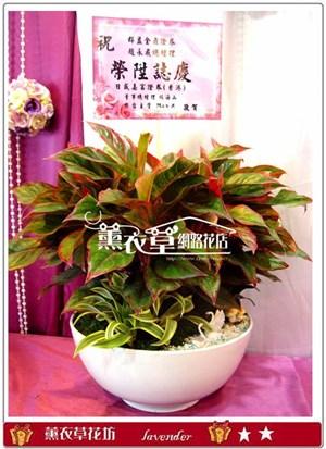 組合盆栽設計y32863