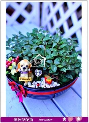 種子盆栽設計c110122