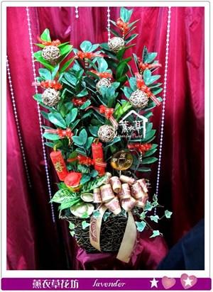 金錢樹盆栽c011808