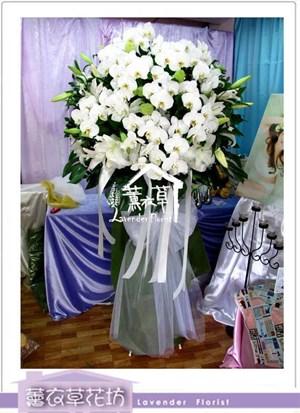 蝴蝶蘭花藍設計aa5576