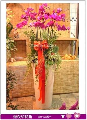 豪華行蝴蝶蘭A101