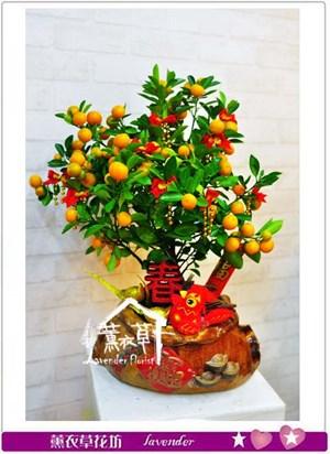 金桔樹~新年限定106010411