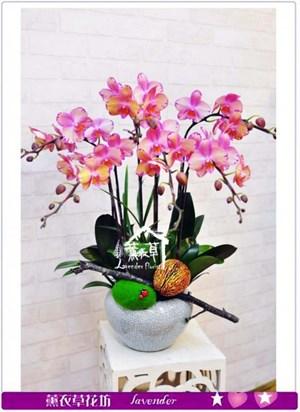 高雅蝴蝶蘭禮盆b052722
