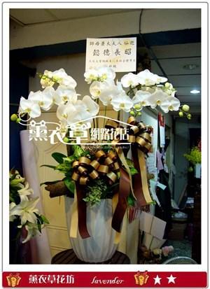 高雅蝴蝶蘭5朱y2557