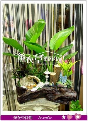 天堂鳥組合盆栽y3912