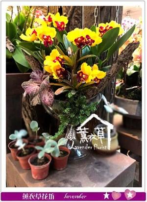 東亞蘭蘭花設計 106122501