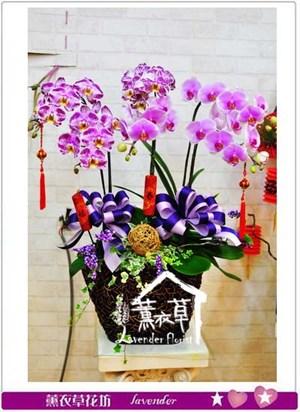 蝴蝶蘭設計106010906