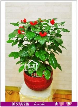 旺旺樹b032621