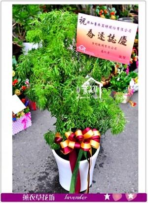 富貴樹盆景c101510