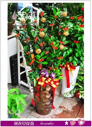 金錢樹盆栽 106082201