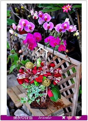 高雅蝴蝶蘭c090411
