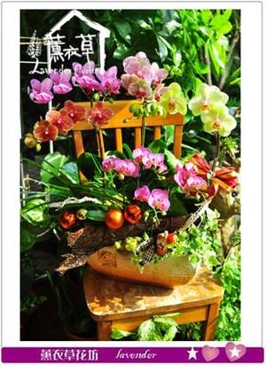 蝴蝶蘭禮盆 106090817