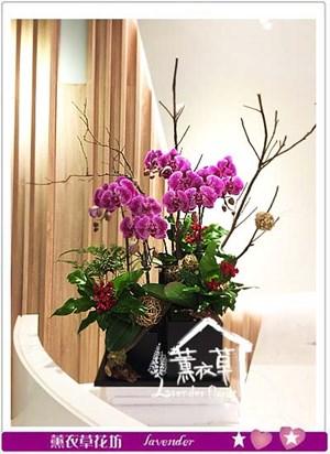 蝴蝶蘭設計 106120711