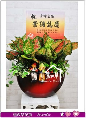 組合盆栽設計c110525