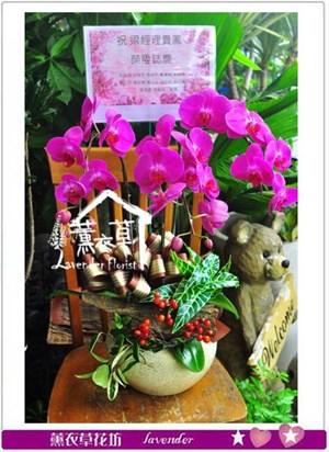 高雅蝴蝶蘭3朱c021841