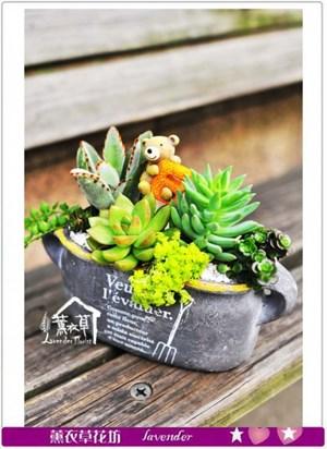 多肉植物設計b030706