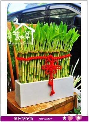 開運竹 盆栽 106100205