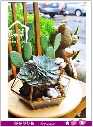 多肉植物設計 106101306